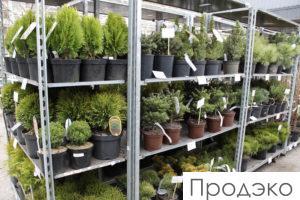 бирки и этикетки для растений